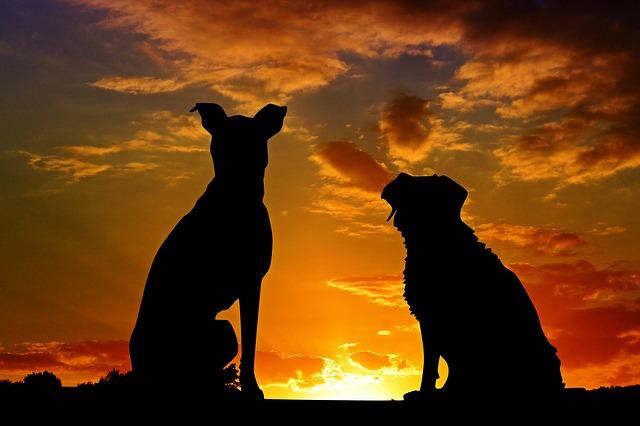 psi ve tmě