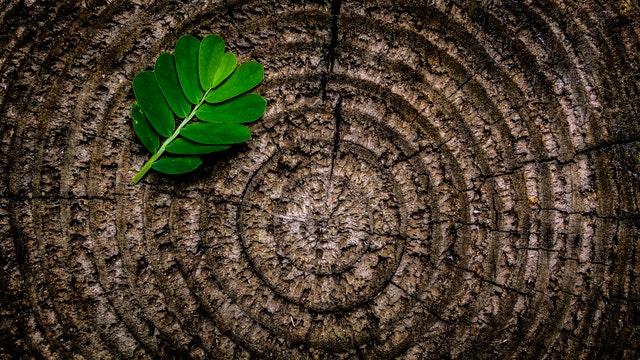 dřevo, letokruhy, list